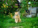 Quand minou devient utile au jardin